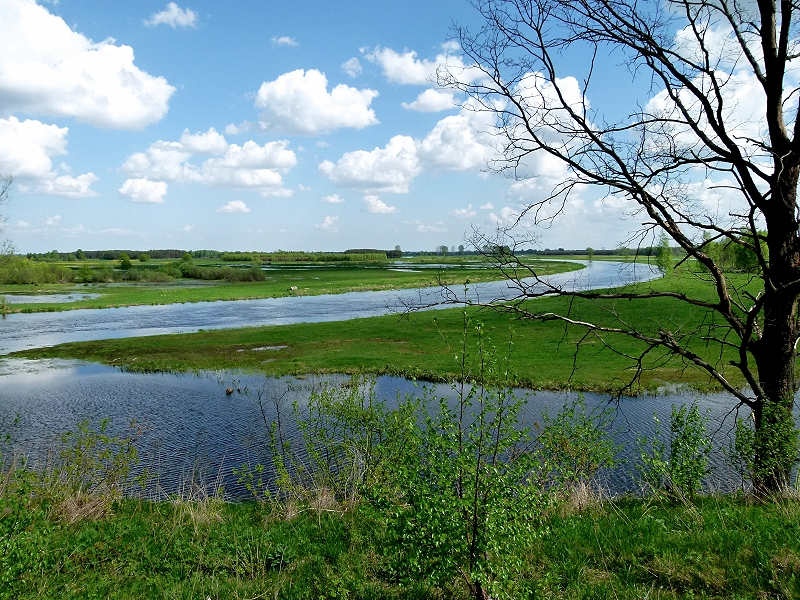Narew- Landschaft
