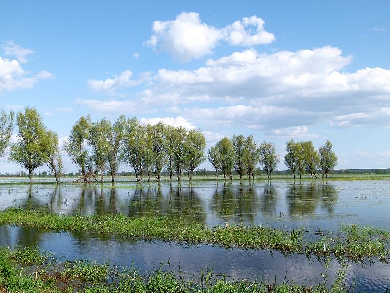 Biebrza Nationalpark, überflutete Wiesen