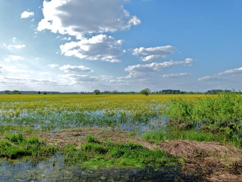 Überflutete Wiesen am Narew