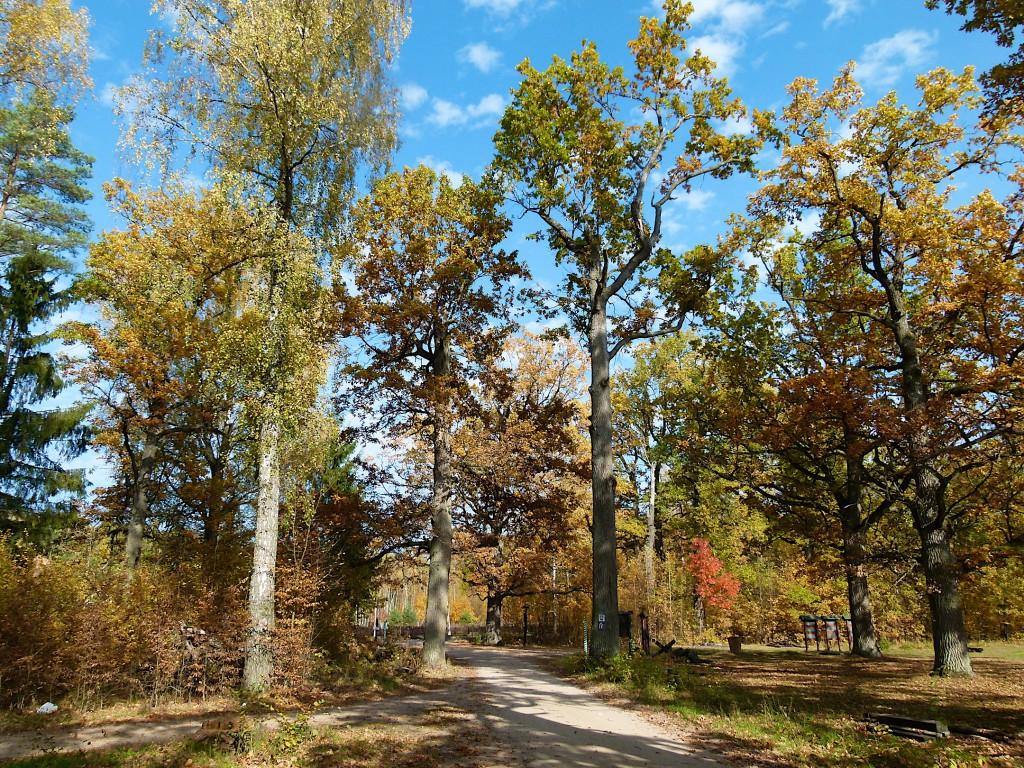 Urwald im Herbst