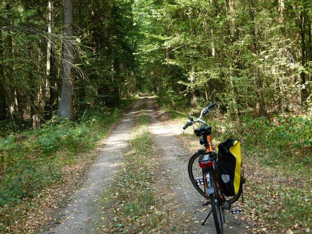 Mit dem Rad durch den Urwald