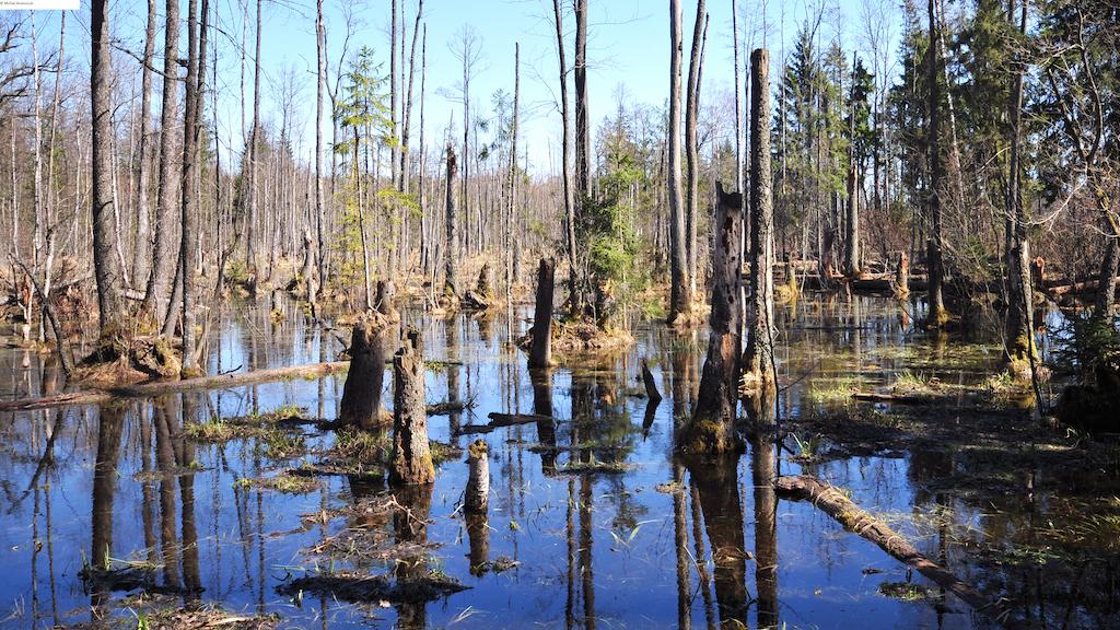 Wasser im Urwald