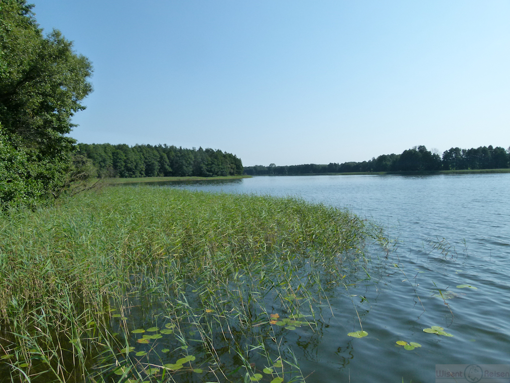 Wigrysee im Sommer